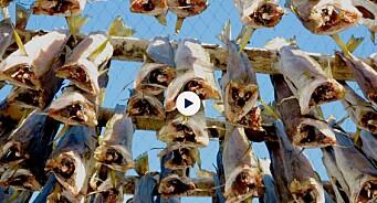 Journalistpris til NRK-dokumentar om torskefusk