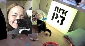 Journalist Hanne er matmor på direkten: Lager pussig valg-TV med de hjemløse kattene Erna, Jonas og Knut Arild på P3