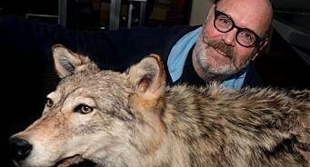 I denne avisa skriver de flere ganger i uka om ulv: – Angrep og gode menneskehistorier er helt i toppen